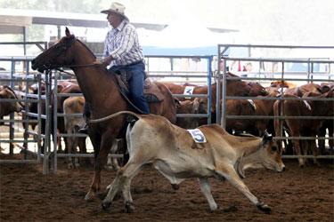 QWCHC Rodeo 4